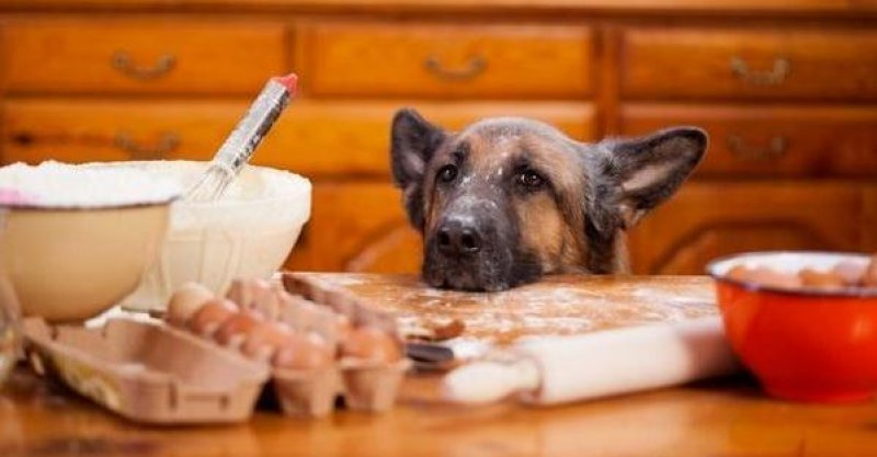狗狗總是撒嬌。想要你給它吃的?這四個小技巧讓狗狗不再煩人-favourpets.com - 萌寵小可愛