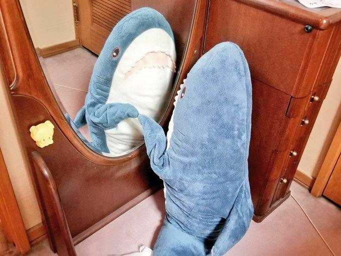 5隻IKEA鯊魚玩偶「狂曬幸福日常生活」!一起吃西瓜看電視「看到開車出遊畫面」網融化:鯊鯊們超守法 - Fun頭條