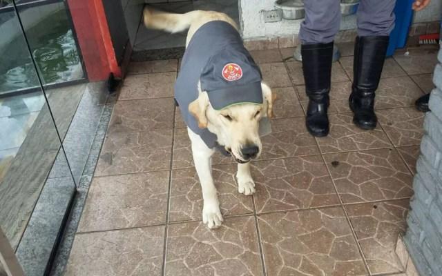 Cachorro Speedy fardado como bombeiro (Foto: Alexandre Dourador/8GB de Santo André)
