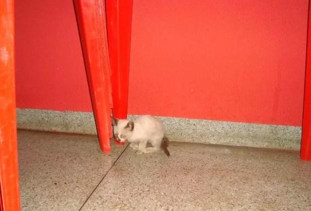 Gato entalado Goiás 2 (Foto: Divulgação/ Corpo de Bombeiros)