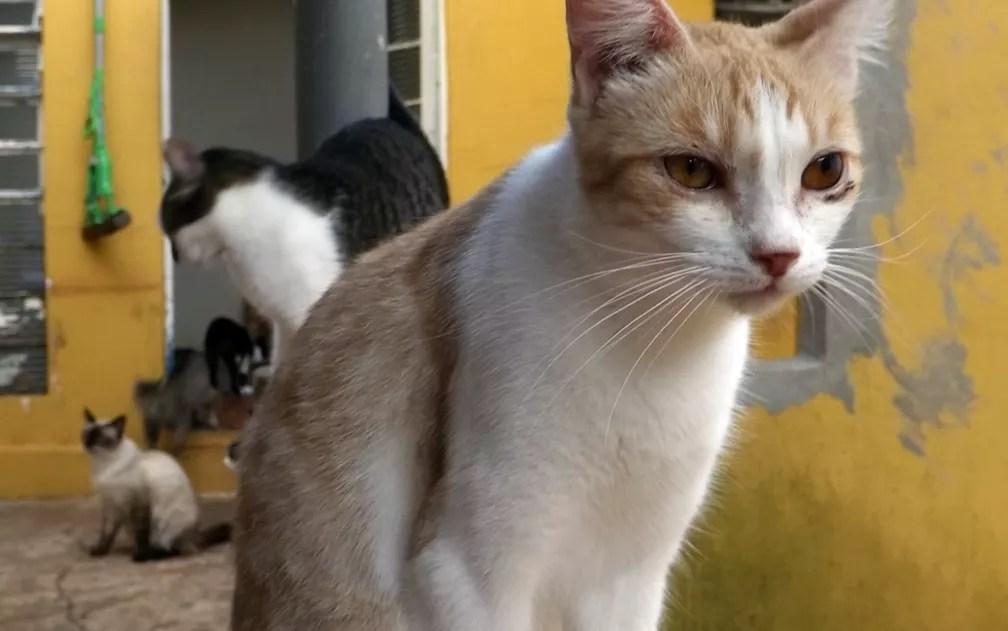 Mulher superou síndrome do pânico e depressão após adotar gatos  (Foto: Caio Gomes Silveira/ G1)