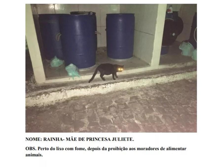 Ação mostra imagens de alguns dos gatos recorrendo ao lixo após o condomínio proibir moradores de alimentarem os animais — Foto: Reprodução
