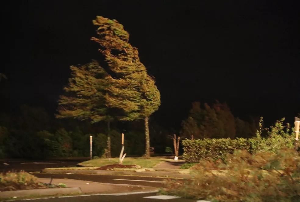 Ventos provocados pelo furacão Laura balançam árvore em Lake Charles, Louisiana, nesta quinta-feira (27) — Foto: Joe Raedle / Getty Images / AFP