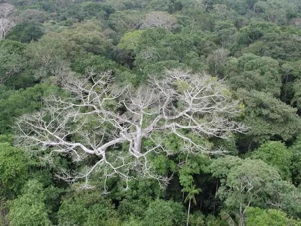 Amazônia mostra sinais de degradação devido a mudanças climáticas (Foto: Divulgação/NASA/JPL-Caltech)