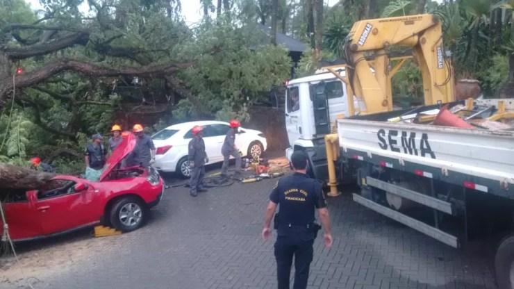 Bombeiros tentam retirar a árvore que caiu sobre o veículo em Piracicaba — Foto: Edijan Del Santo/EPTV