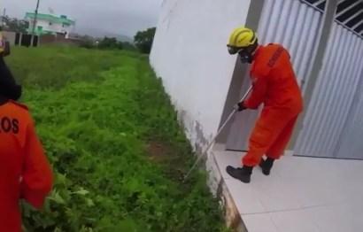 Bombeiros resgatam jacaré em União dos Palmares, AL — Foto: Reprodução
