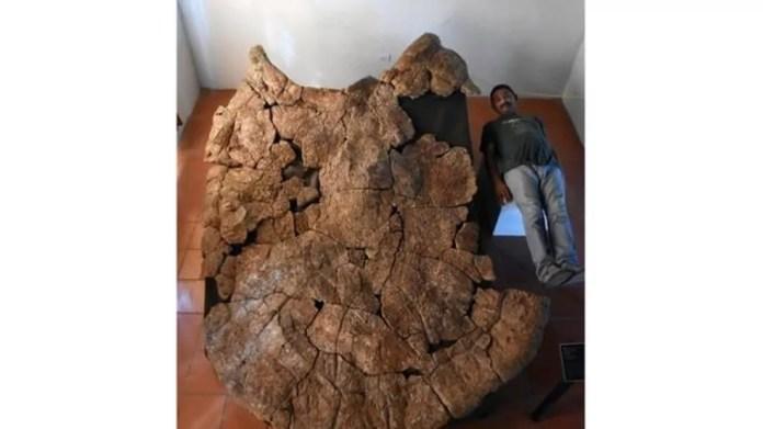O fóssil mostra que a tartaruga era muito maior que os homens — Foto: PA MEDIA/BBC