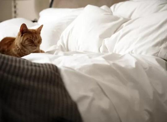 Resultado de imagem para gatos na cama