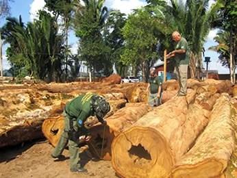 Ao todo, 7,5 mil metros cúbicos de madeira foram apreendidos. (Foto: Divulgação/Ibama)