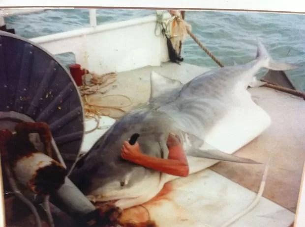 Depois de pescar tubarão, homem entrou em animal morto e tirou foto como se estivesse atacando animal por dentro (Foto: Divulgação/3AW Breakfast.)
