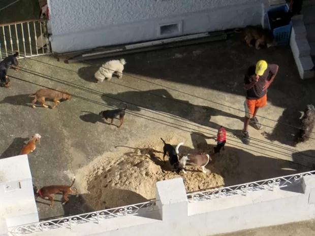 Alguns animais foram flagrados do lado de fora da casa pela vizinha (Foto: Maria Soares / Arquivo Pessoal)