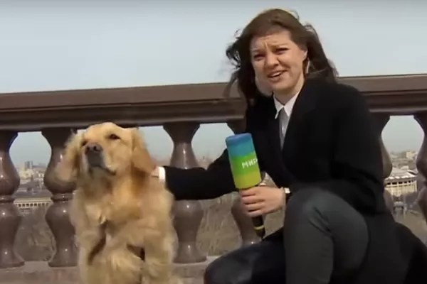 Russian journalist Nadezhda Serezhkina showing her reconciliation with the dog who stole her microphone (Photo: Reproduction)