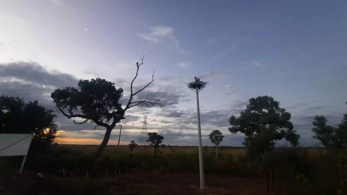 Fotos mostram nova morada de aves típicas do Pantanal, na BR-262 — Foto: Alexander de Oliveira