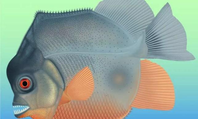 Ilustração de como deve ter sido o peixe pré-histórico.  (Foto: The Jura-Museum)