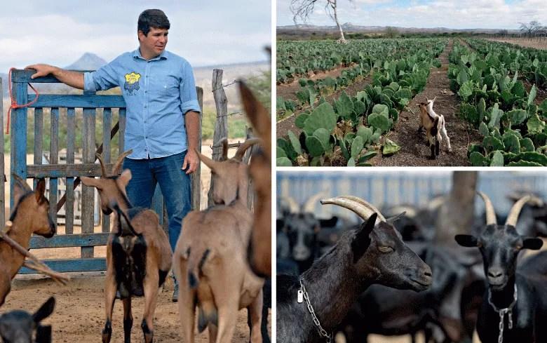 cabras-globo-rural-edicao-378-abril-2017 (Foto:  )