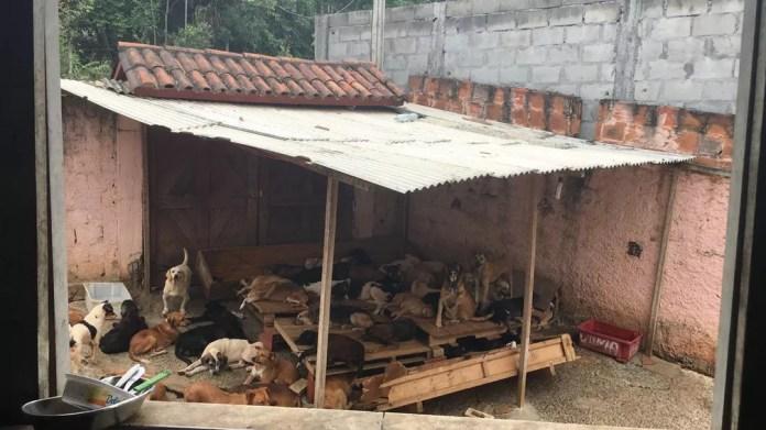 Cães do lado de fora da casa de Ângela, em Lauro de Freitas — Foto: Alan Alves/G1