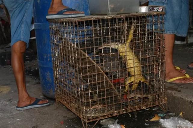 Mercado negro em Manila, nas Filipinas: cientistas disfarçados monitoraram lagartos vendidos ilegalmente como animais de estimação e descobriram novas espécies (Foto: Sy Emerson/Divulgação)