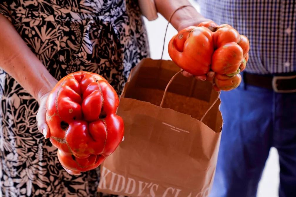 """Tomates concorrentes na 14ª edição do concurso """"tomate mais feio"""" em Tudela. — Foto: REUTERS/Vincent West"""