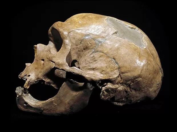 Crânio de homem de Neanderthal, do período Paleolítoco, achado na França em 1908 e exposto em Milão (Foto: Leemage/Arquivo AFP)