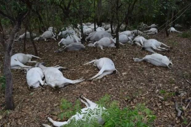 Raio mata gado - Paraíso do Tocantins 2 (Foto: Divulgação/Surgiu.com)