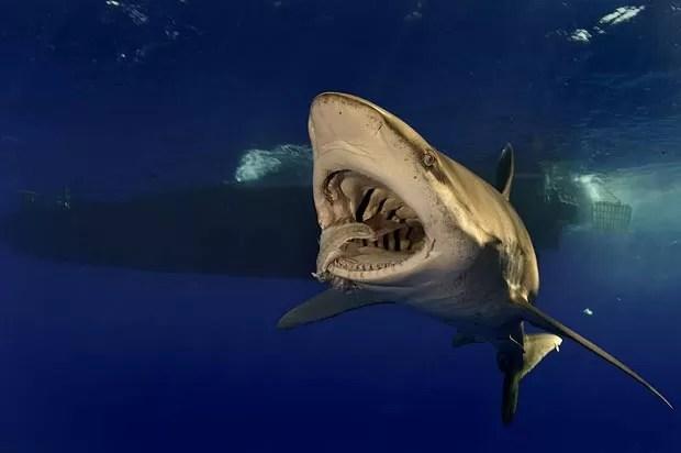 'A fotografia submarina é muito desafiadora', diz Brian Skerry. (Foto: Brian Skerry/Caters)
