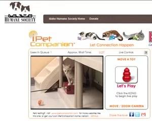 Internauta pode controlar câmera e brinquedos remotamente para interagir com gatos (Foto: Reprodução)