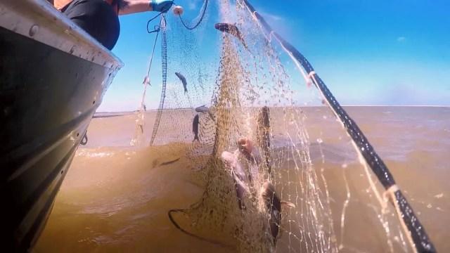 Pesca está proibida na foz do Rio Doce, em Linhares — Foto: Rafael Zambe/ TV Gazeta