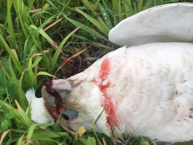 Animais estavam sangrando quando foram encontrados (Foto: Reprodução/Facebook)
