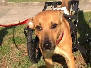 Apesar de precisar de cadeira de rodas, Zezinho passeia normalmente (Foto: Reprodução / Facebook)