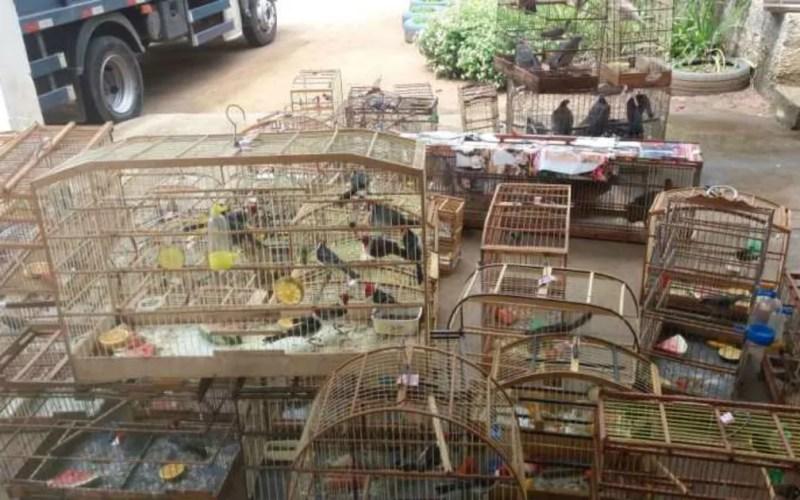 Mais de 550 animais silvestres são resgatados durante operação da PRF em sete cidades do oeste da Bahia — Foto: Divulgação/Polícia Rodoviária Federal