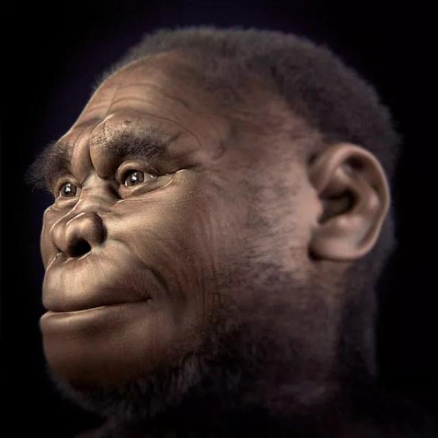 Simulação do Homo floresiensis (Foto: Cicero Moraes et alii/Wikimedia Commons)