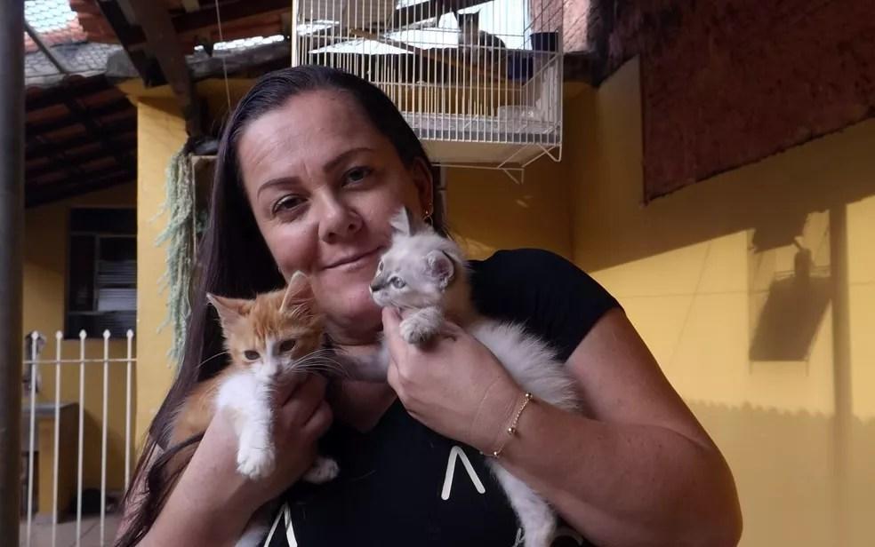 Gatos se espalham até pelo telhado da casa de Katiuscia (Foto: Caio Gomes Silveira/ G1)