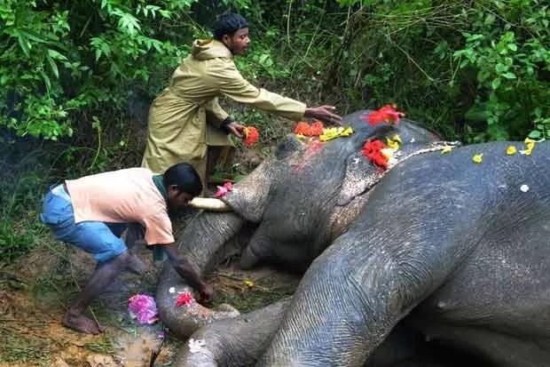 Moradores cobrem corpo de elefante com flores ao lado da estrada de ferro (Foto: AFP Photo )