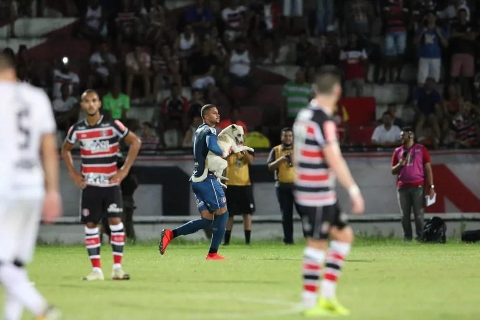 Goleiro tricolor levou algumas mordidas na luva enquanto tirava o cachorro — Foto: Aldo Carneiro / Pernambuco Press