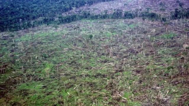 Desmatamento na Amazônia: nas florestas tropicais, que têm de 90% a 100% de cobertura de árvores, as alterações climáticas têm trazido efeitos devastadores — Foto: Douglas Daly/BBC News Brasil