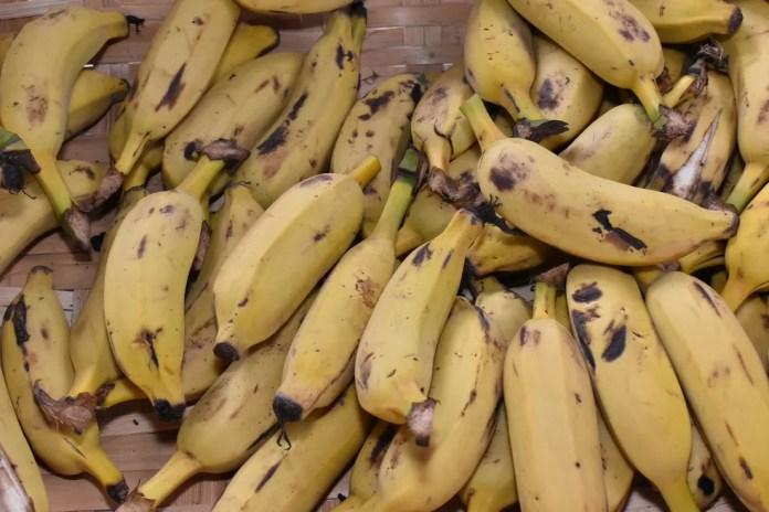 Pandemia da banana pode ter resultados positivos se nos forçar a cultivar bananas de maneira mais ecológica e a comer uma variedade maior de frutas, diz cineasta — Foto: Marco Aurélio/Prefeitura de Uberaba