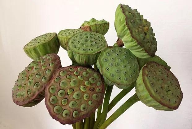 paisagismo-flor-de-lotus-6 (Foto: Divulgação/Amapá Flowershop)