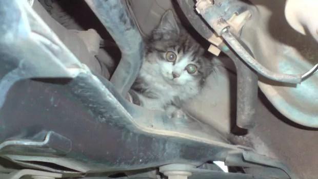 Gato foi encontrado na suspensão do carro (Foto: Augusto José Damascena Garcia/ VC no G1)
