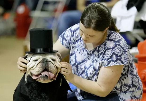 Colleen Kelley, de Iowa City, arruma a cartola de 'Bruce' durante competição nos EUA (Foto: Charlie Neibergall/AP)