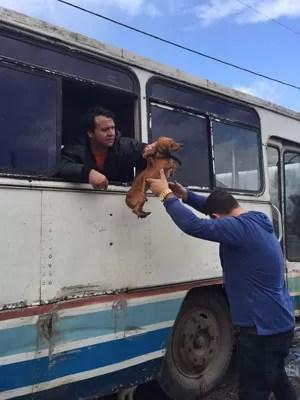 Cães resgatados Alvorada RS (Foto: Nelson Fernandes/Arquivo Pessoal)
