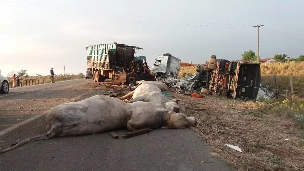 Caminhão boiadeiro invadiu a contra mão e bateu na lateral de uma carreta bitrem (Foto: Divulgação/ Polícia Rodoviária Federal)