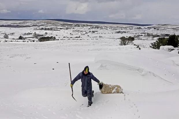 Ovelhas tiveram que serem resgatadas após nevasca (Foto: Cathal McNaughton/Reuters)