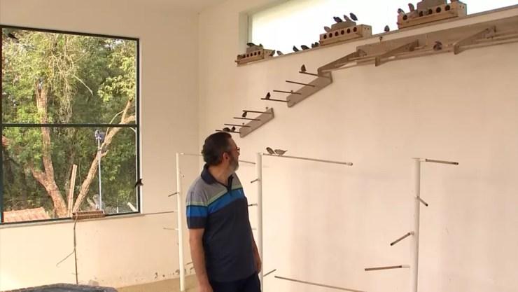 Criador de Araçoiaba da Serra tem mais de 400 pássaros da espécie (Foto: Reprodução/TV TEM )
