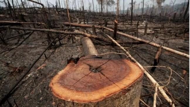 Em comparação com 2020, o desmatamento no Amazonas registrou um aumento de 49,9% — Foto: Reuters