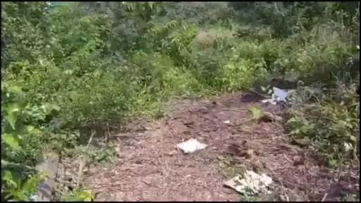 Corpo foi encontrado na comunidade Pau Brasil, em São José de Mipibu — Foto: Reprodução