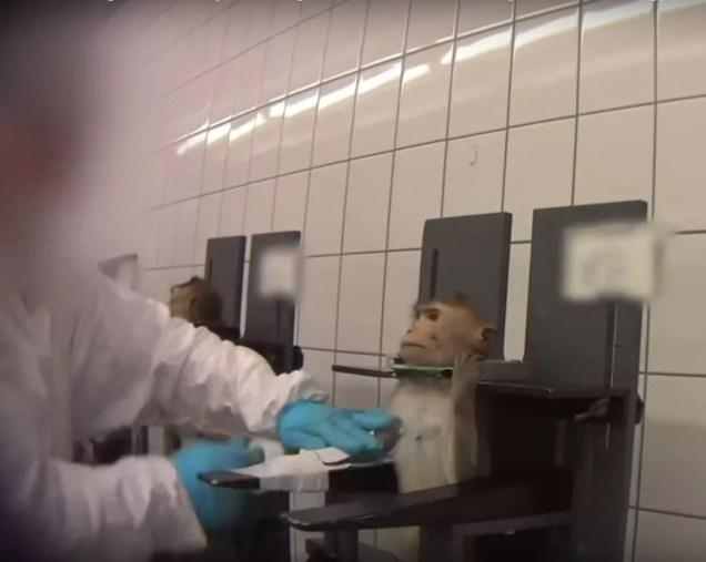 ONG internacional denuncia maus-tratos a beagles e macacos em laboratório alemão — Foto: Reprodução/YouTube