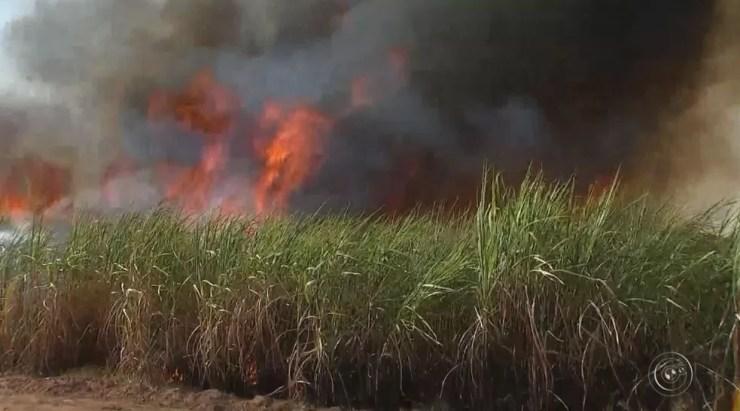 Três fazendas com plantação de cana-de-açúcar foram atingidas (Foto: Reprodução / TV TEM)