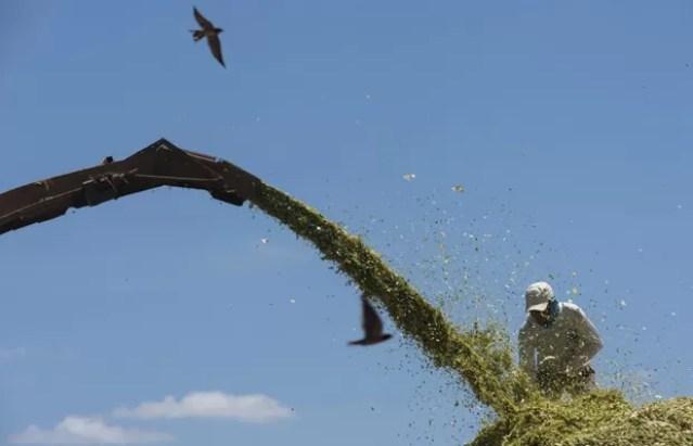 Homem trabalha em fazenda de milho em Limoeiro do Norte, no Ceará  (Foto: Reuters/Davi Pinheiro)