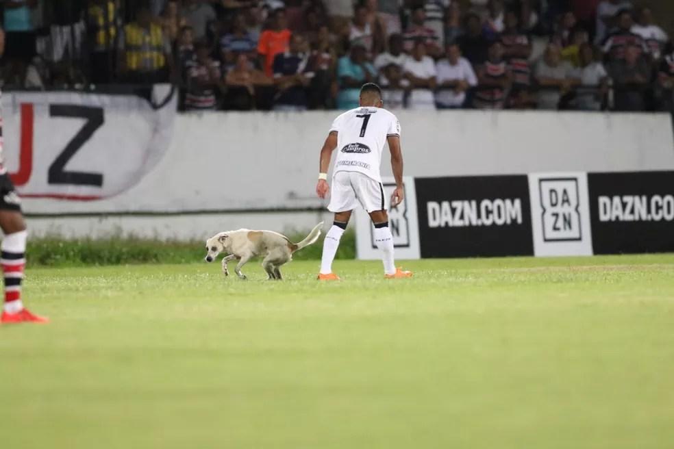 Atacante Gil não conseguiu pegar o intruso — Foto: Aldo Carneiro / Pernambuco Press