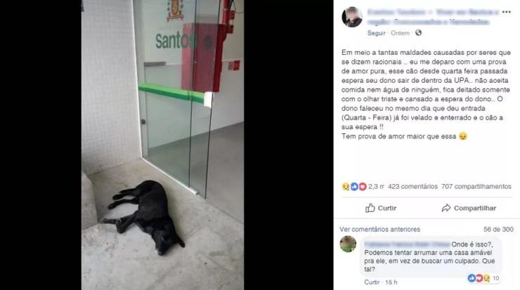 Publicação com pedido de ajuda a cachorro alcançou mais de 3 mil interações no Facebook — Foto: Reprodução/Facebook